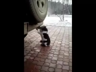 Кот - наркоман